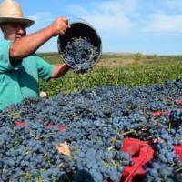 Vini romeni: vini da scoprire