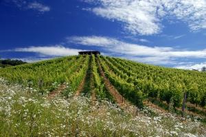 Bisol, l'excellence de la terre au verre  #prosecco  #cartizze #italie