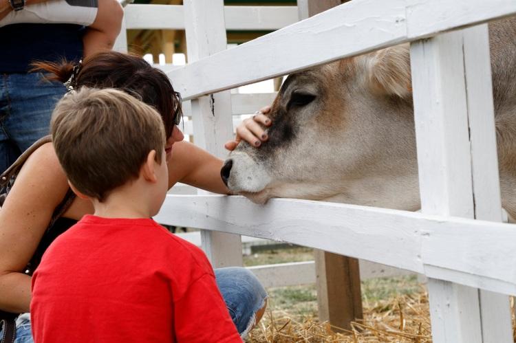 rural-festival-bambini-e-animali