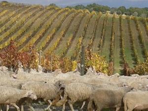 CARPINETO tra le top 100 al mondo  nella classifica di WineSpectator