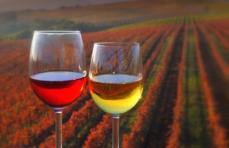 vinograd_kozarca_z_vinom