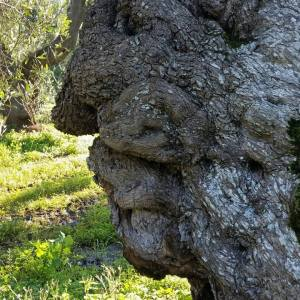 Olio extra vergine Tenute Parco piccolo: tradizione einnovazione