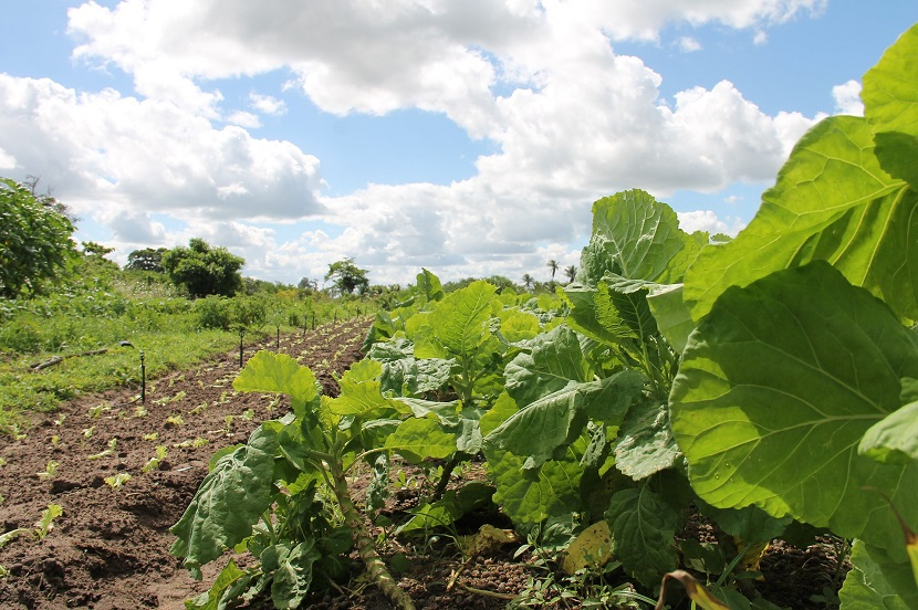 Ue agricoltura biologica: passo decisivo verso nuove regole