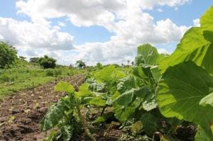 Agricoltura biologica: Ue passo decisivo verso nuoveregole