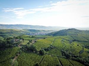 Il Soave dà il via alla prima candidatura GIAHS-FAOitaliana