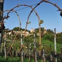 Asolo wine tasting 2018:non solo prosecco
