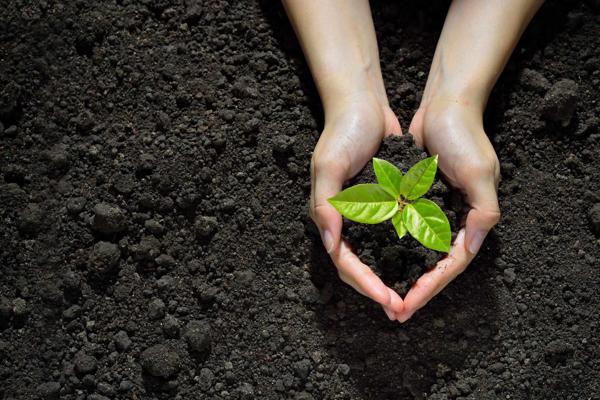 Laudato si', comunità in tutto il mondo  per diffondere il messaggio ecologista di papa Francesco