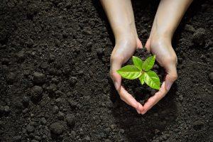 Laudato si', comunità in tutto il mondo  per diffondere il messaggio ecologista di papaFrancesco