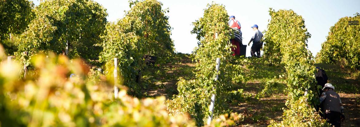 In estate Capetta porta sulla tavola  due vini DOC del Monferrato!
