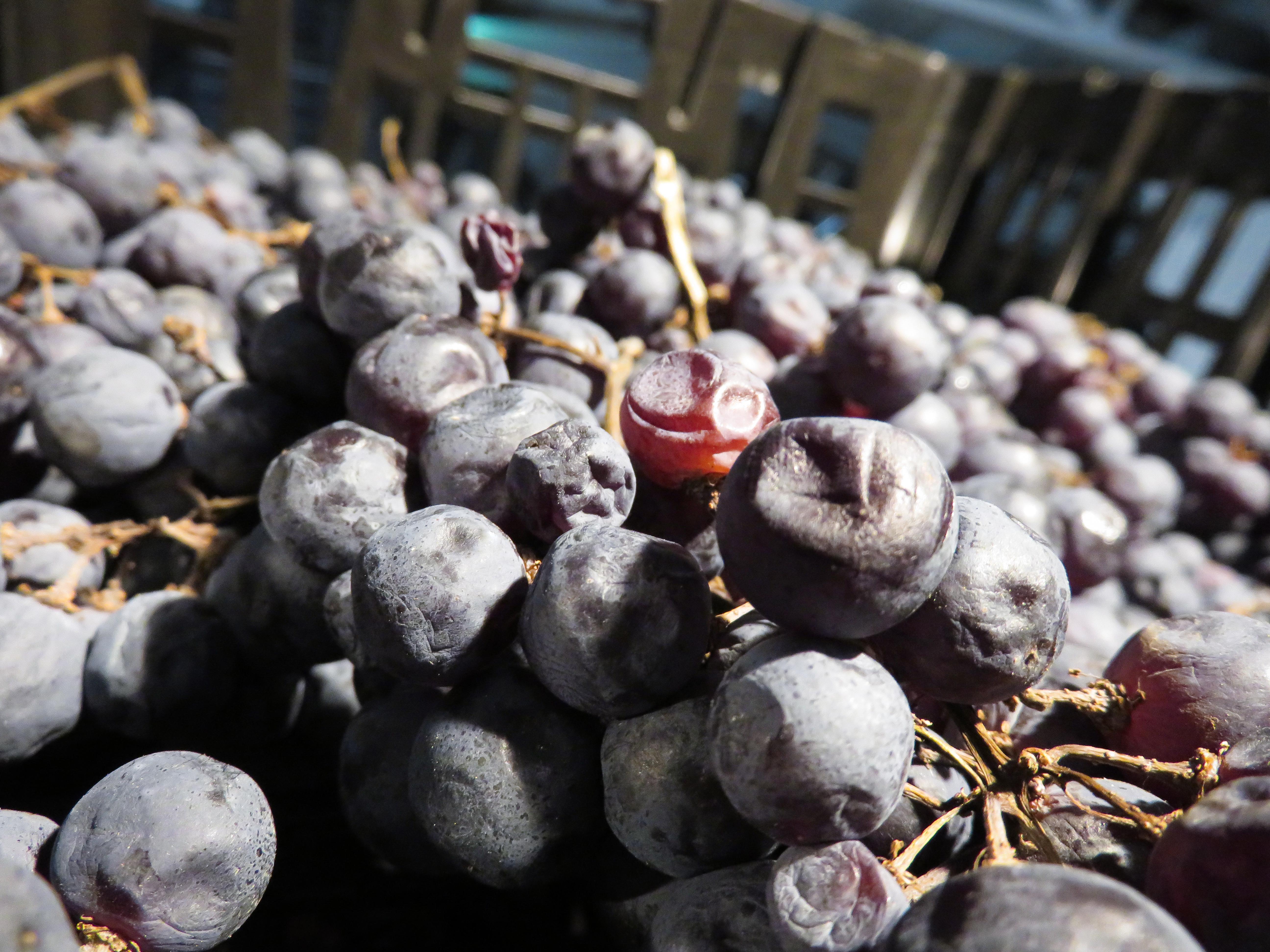 Cantina di Soave inaugura il nuovo fruttaio di Tregnago.doc