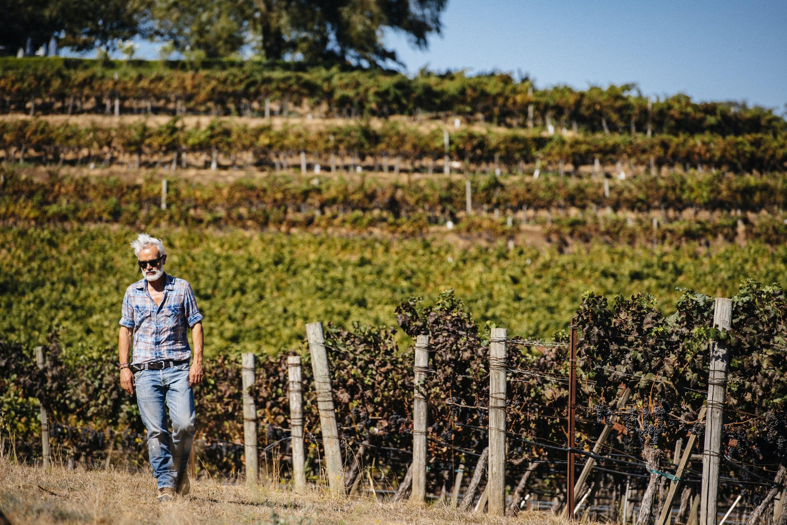 """Marco Simonit:  """"Italiani, volete lavorare in vigna?  Preparatevi, c'è lavoro per tutti!"""""""