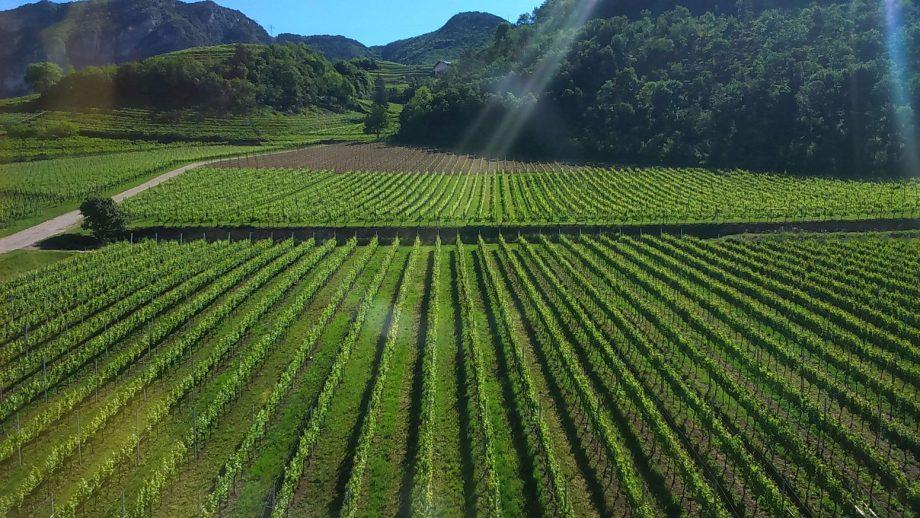 Clima e viticoltura, FEM coordina un progetto che coinvolge sei paesi europei.