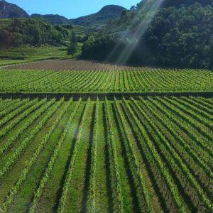 Clima e viticoltura, FEM coordina un progetto che coinvolge sei paesieuropei.