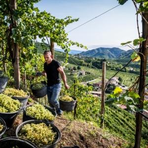 Vendemmia 2020: Col Vetoraz fa il puntosull'annata