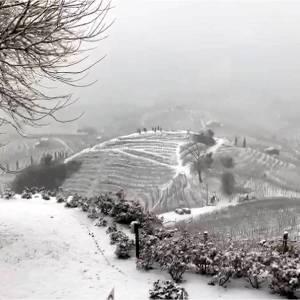 Sotto la neve pane, ma anche vino!