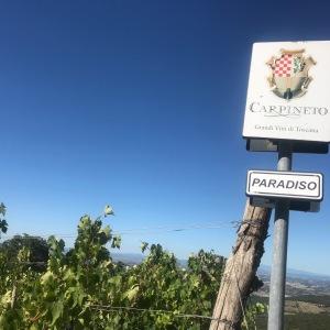 Debutto della prima Riserva Brunello di Montalcino di Carpineto e l'emozione già volaalta